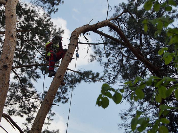 Baumarbeiten von Gartenbau Bänfer